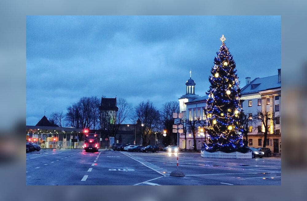 Главная нарвская елка благополучно пережила шторм. В 2013-м ель на Петровской не выдержала ветра