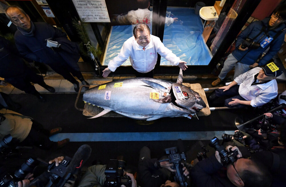 Редкого тунца на аукционе в Японии продали за 1,8 млн долларов