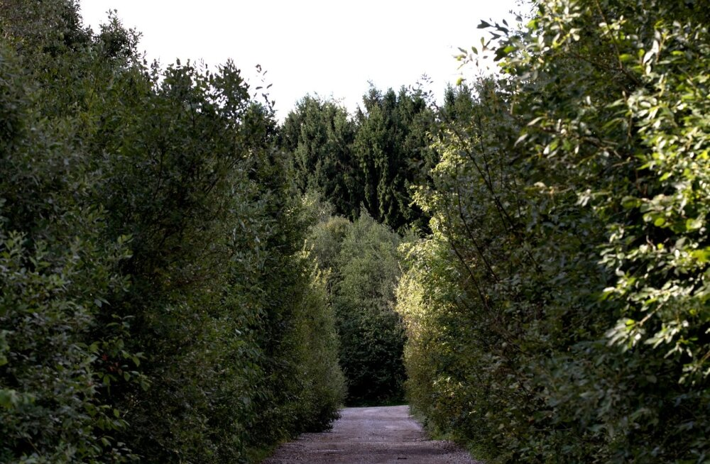 Metsanduse arengukava: keskkonnakaitsjad ja puidutöösturid mahuvad juba ühte ruumi ära
