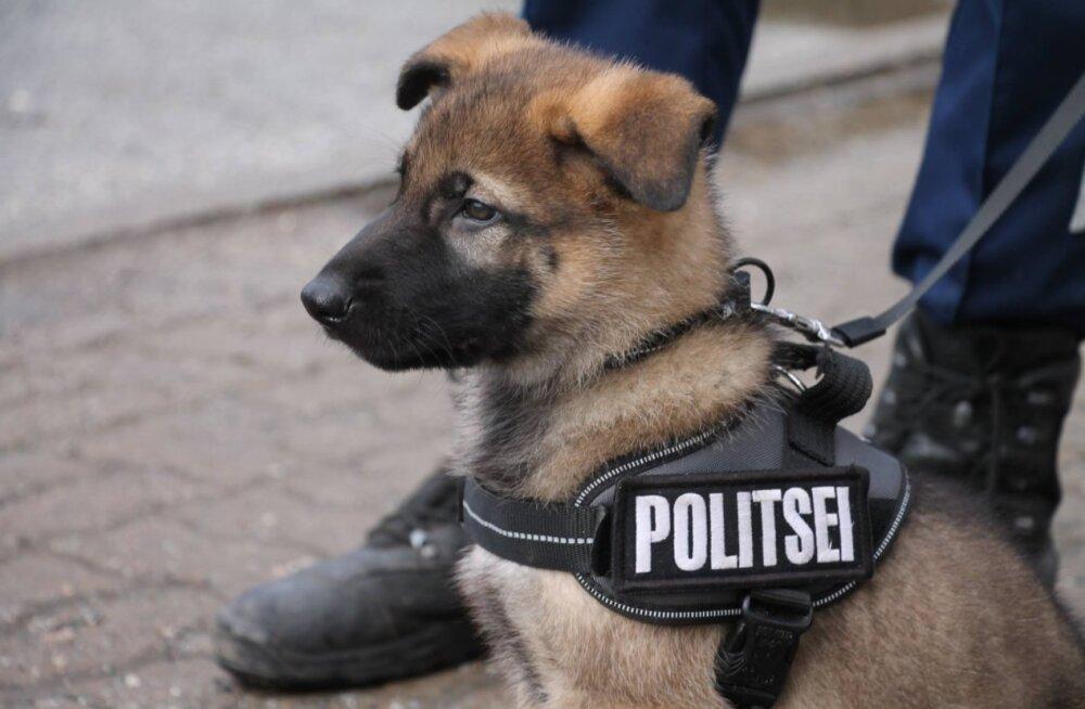 Armsad FOTOD | Rosinasilmne politseikoer Nemo viskas tulevastele valdustele pilgu peale