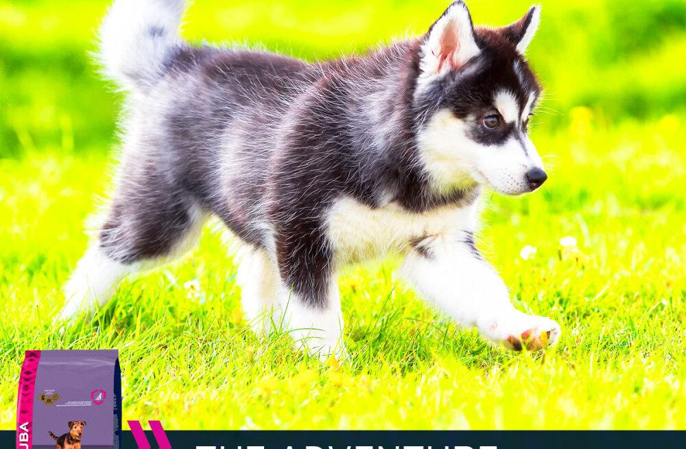 Eukanuba koeratoit — kutsikale parim start eluks