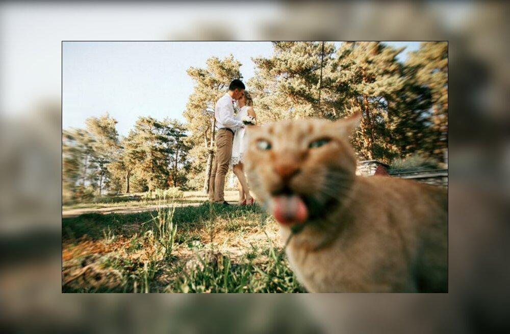 GALERII: Parimad palad! Vaata järgi, millisel geniaalsel viisil kassid viimasel hetkel ilusa pildi ära rikkunud on