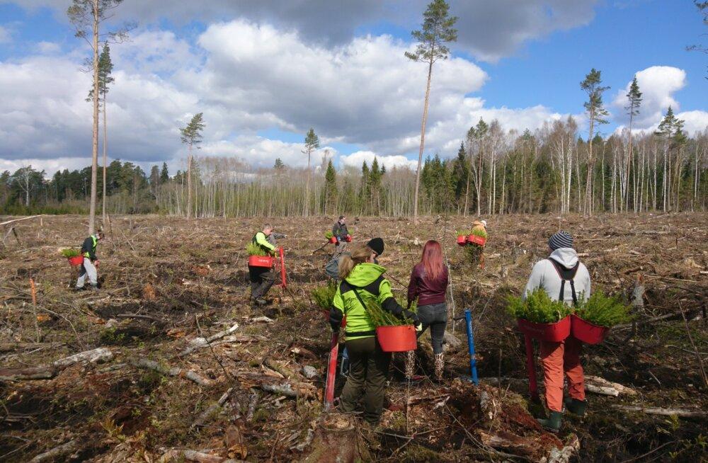 Опрос: 86% жителей Эстонии считают лесной и деревообрабатывающий сектор важной отраслью экономики страны