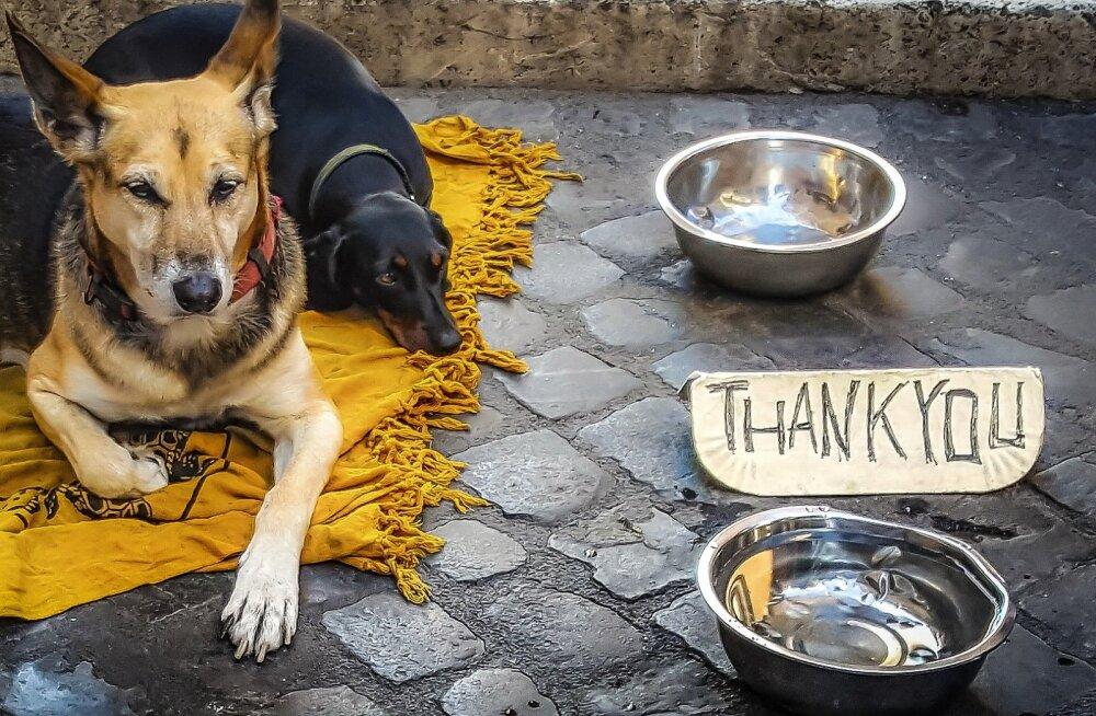 Igasuvine probleem: koos koertega almust paluvad kerjused häirivad loomasõpru