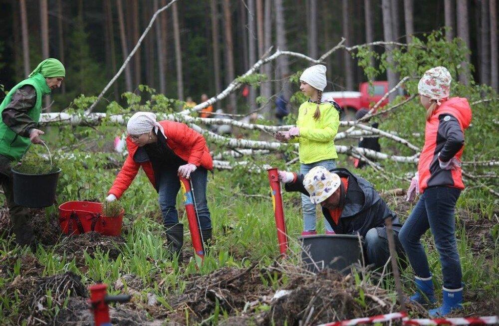 Более 1300 климатических супергероев приняли участие в днях посадки леса RMK