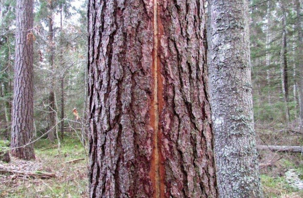 Leili metsalood   Lõhki kistud mets ja inimesed seal sees