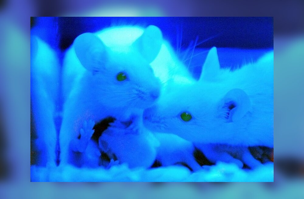 Kemikaal taastab hiirte nägemisvõime