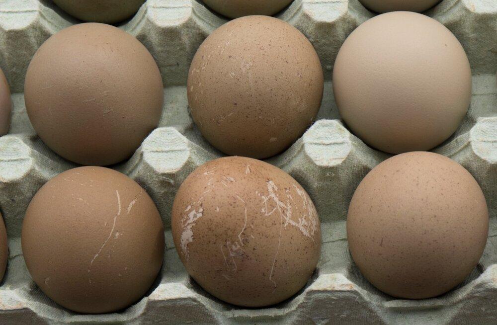 Проверьте холодильник! Произведенные на всех фермах этого предприятия яйца могут быть заражены сальмонеллой