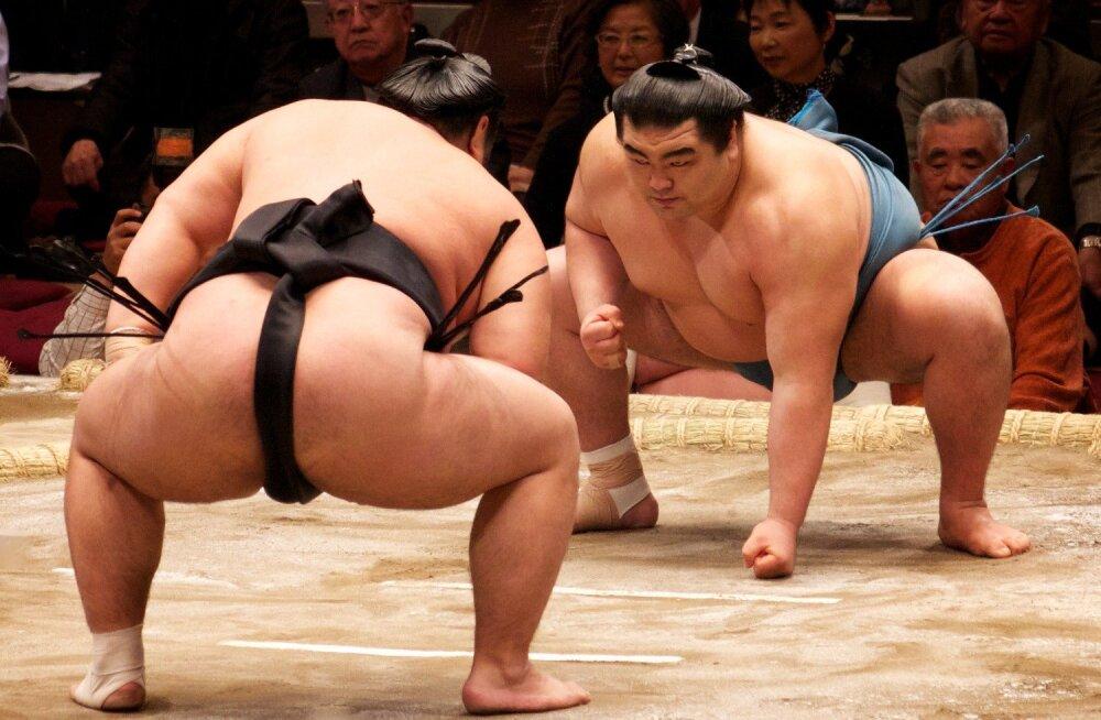 Без зарплаты и женщин: что происходит с сумо в Японии