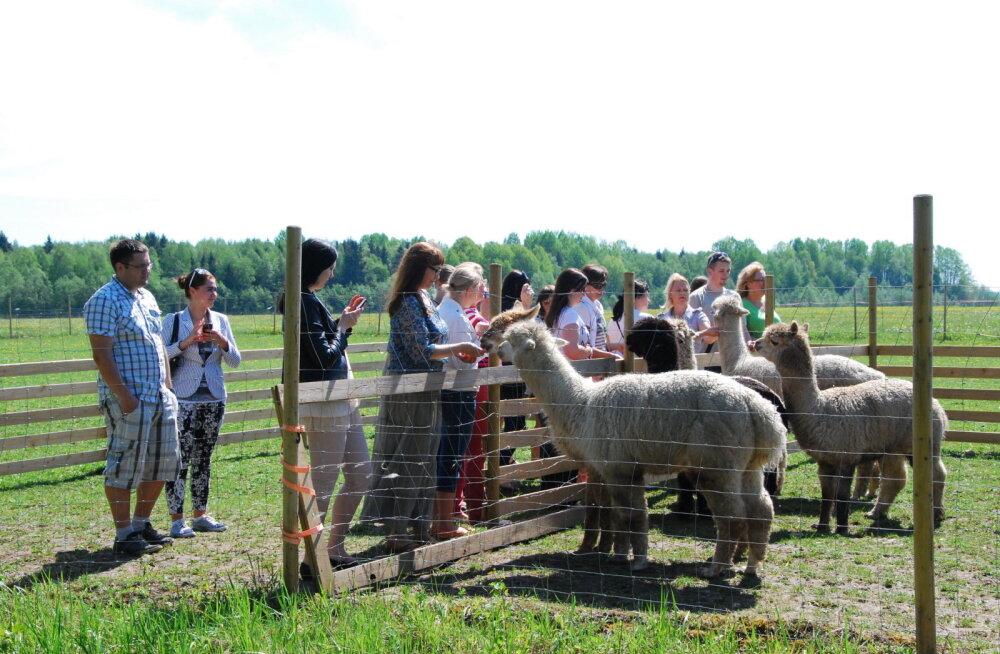 Idee nädalalavahetuseks: viis kohta Pärnumaal, kus saab põnevaid loomi vaadata