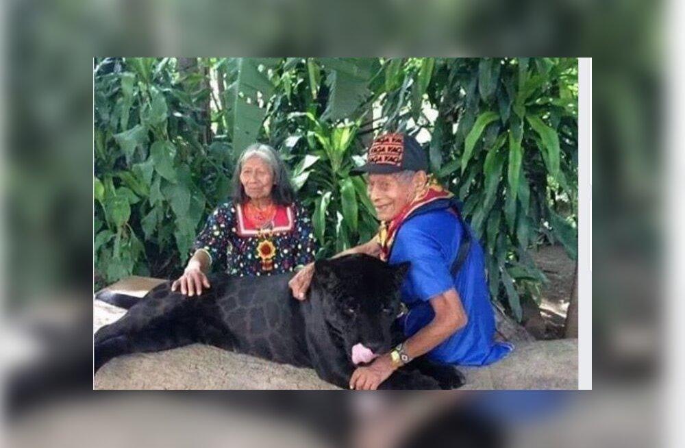 Maiade päritolu vanapaar kasvatas üles musta jaaguari