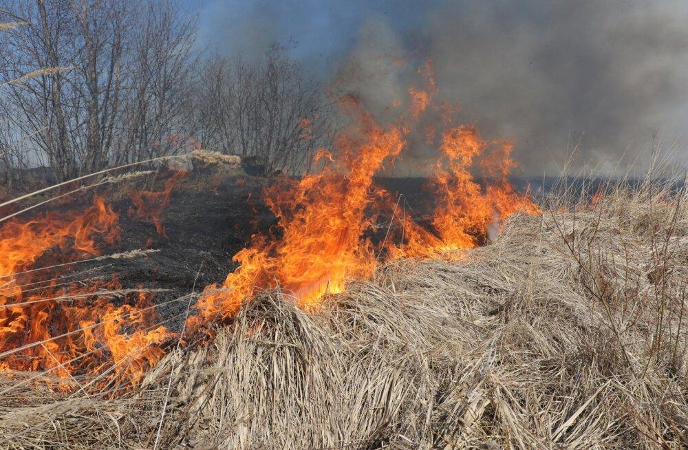 Спасательный департамент: сжигание сухой прошлогодней травы опасно и наказуемо!