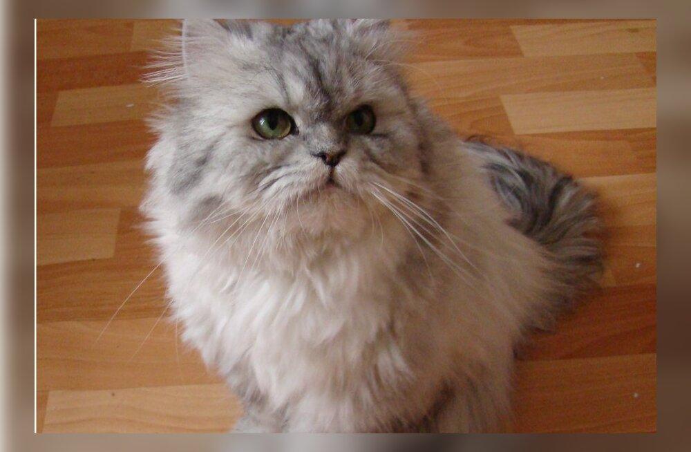 Iraan lubab saata pärsia kassi orbiidile, inimesega katsetatakse 2018