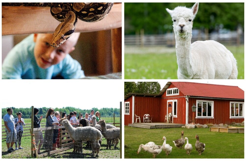 Идея на выходные: 5 интересных мест для общения с животными в Пярнумаа