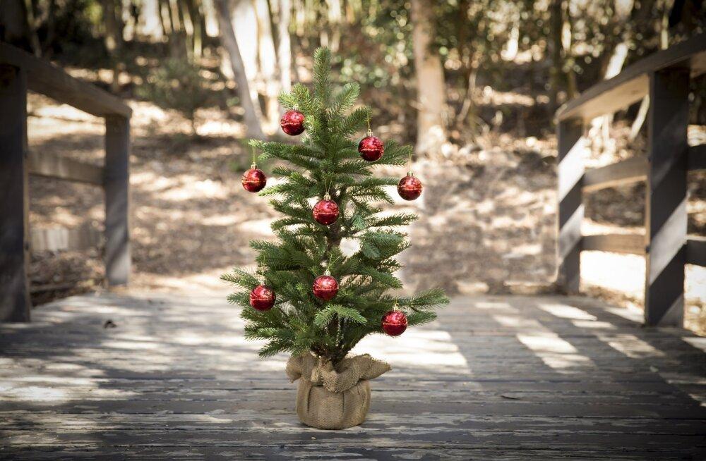 Päris jõulupuu või kunstkuusk – kumba valida?