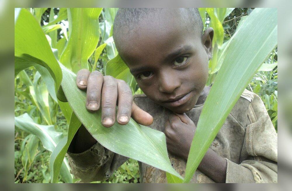 Elust Ugandas: ja kus on sinu neli last?