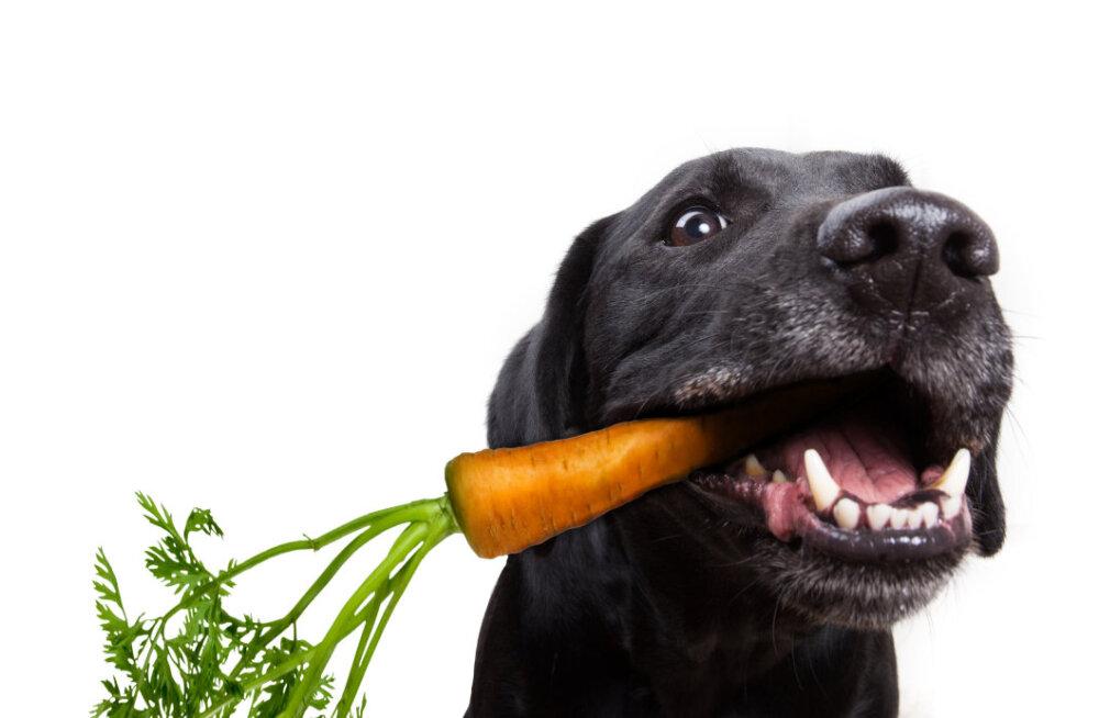Värskendavad vahepealad: veterinaarid soovitavad maiuspalasid, mida koerale palaval suvepäeval pakkuda