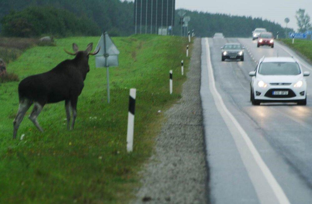 Millistes Eesti piirkondades toimub kõige rohkem autode ja metsaloomade kokkupõrkeid?