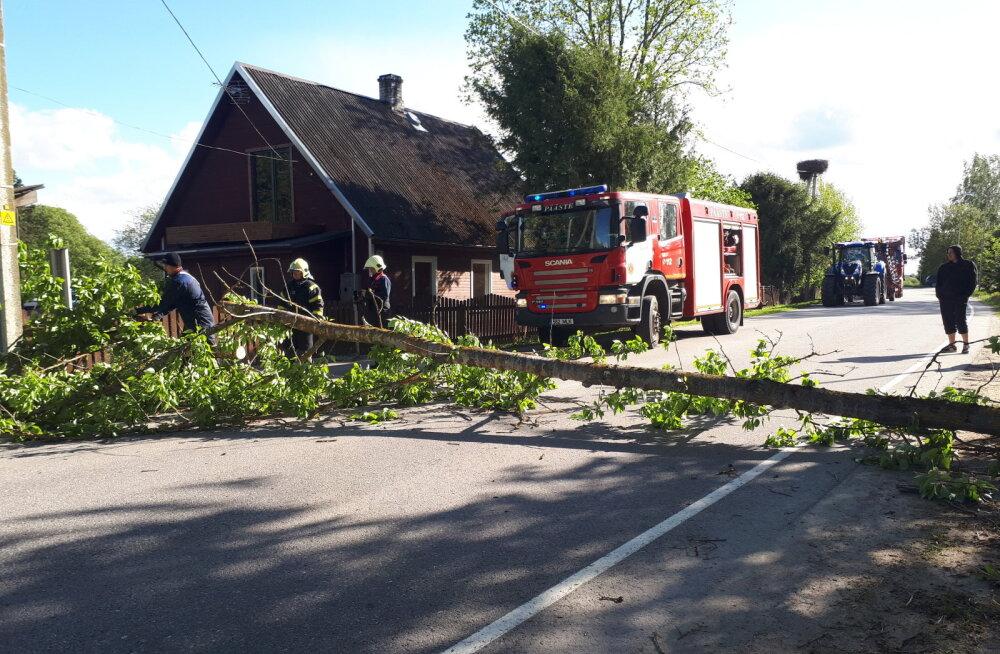 FOTO: Tugev tuul murdis Tsirguliinas puu, kurepesa pääses napilt