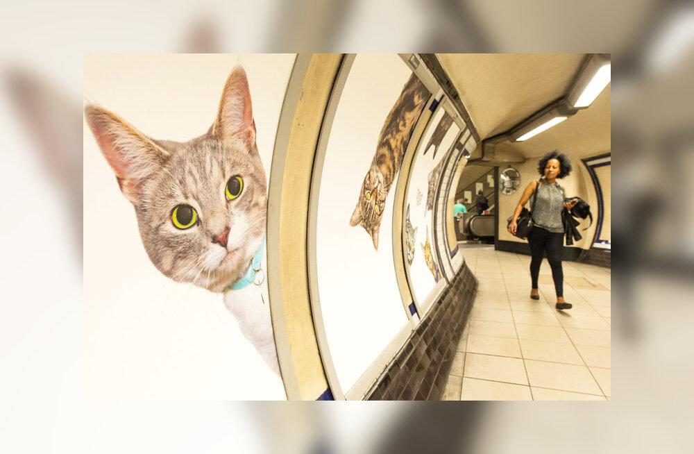 На станции лондонского метро всю рекламу заменили на фотографии котов