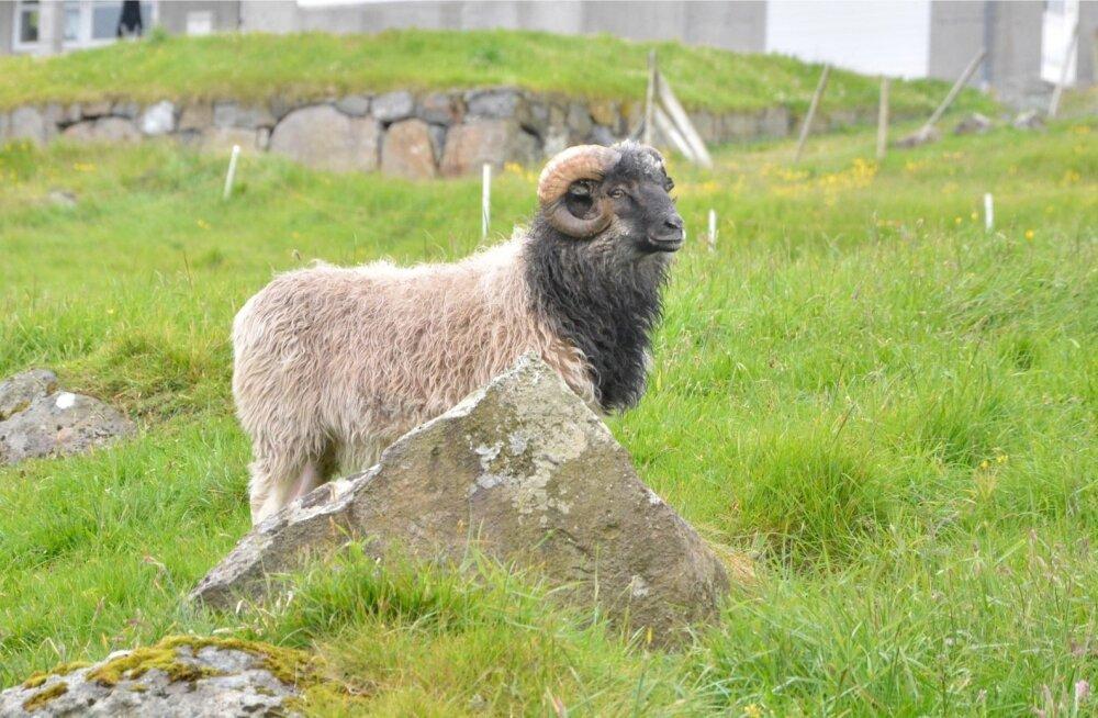 Fääri saared: pole põlde ega lehmi, aga külad säravad