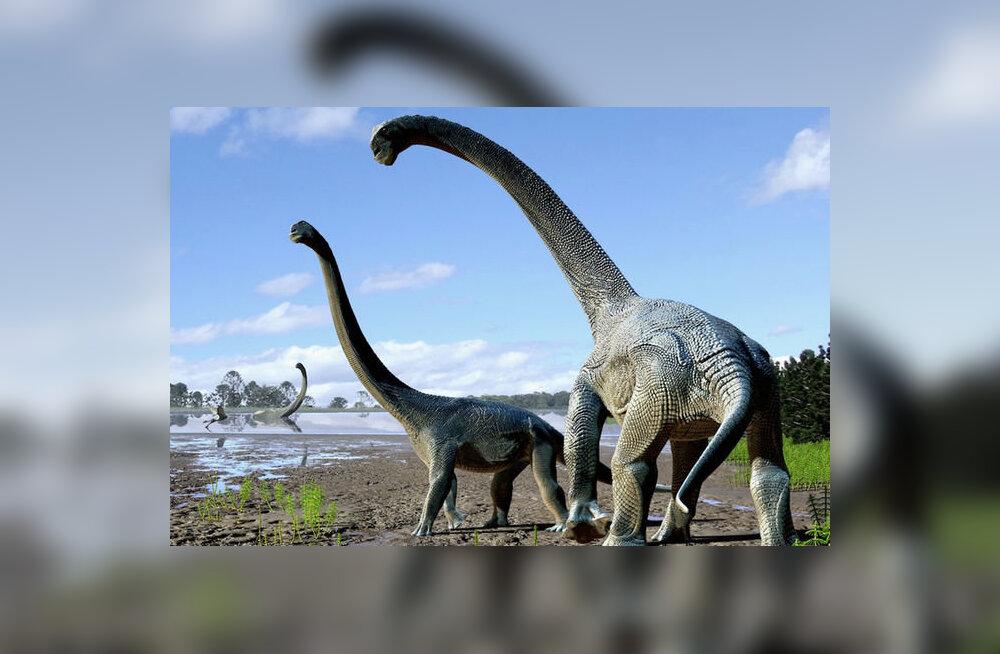 Austraaliast leiti veel üks dinosauruseliik