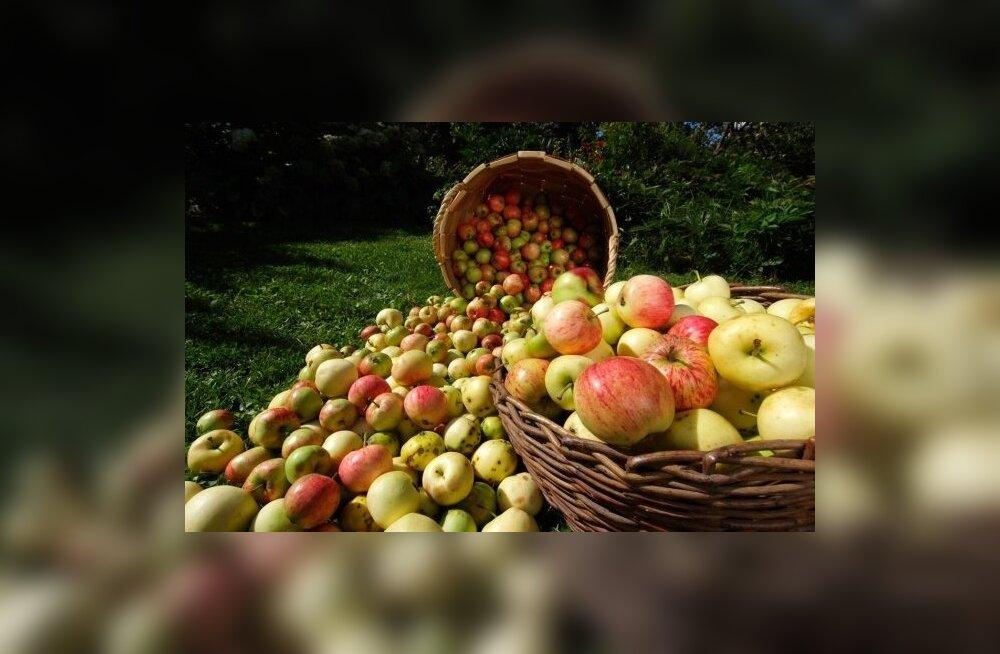 Elukeskkonna ja toidu mõju tervisele