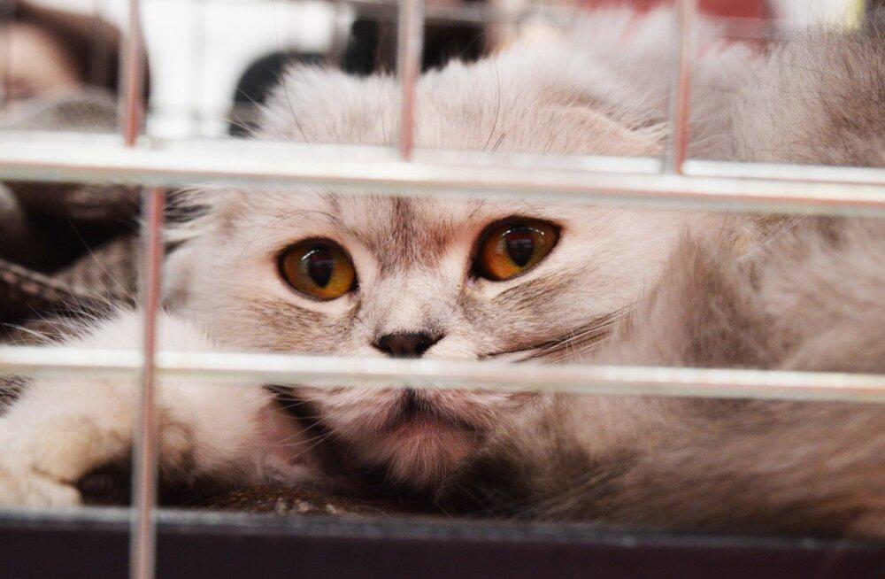 Tartu koduta loomade varjupaiga kassid saavad paremad elutingimused
