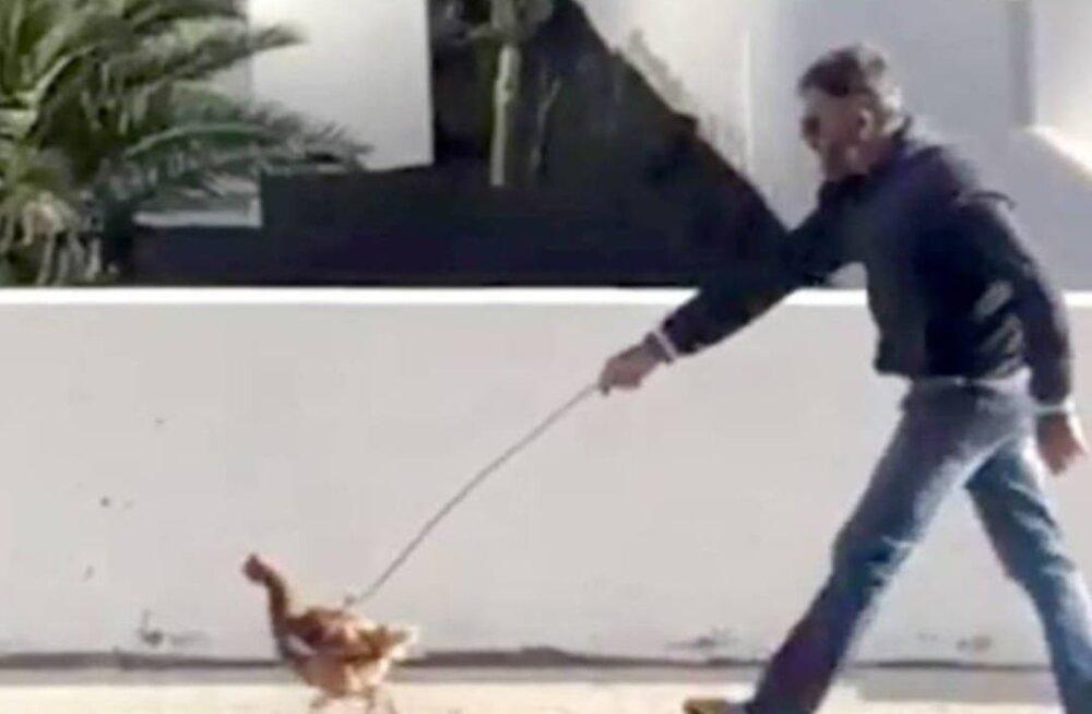 Hispaania politsei karistab tänaval kana jalutanud meest