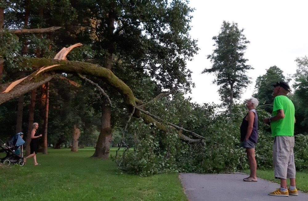 Murdunud puu Pärnu rannapargis