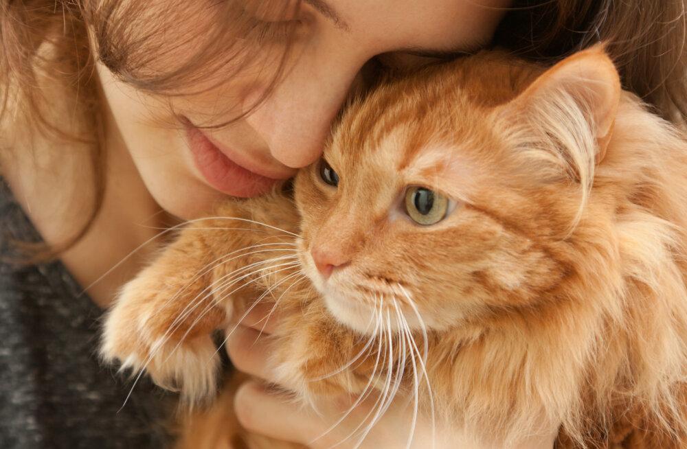 Kui osav kassitõugude tundja sa oled? Tee põnev test ja saa teada