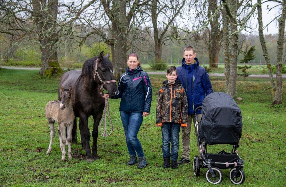 Lea, Kristo ja Robert Hänni puhast tõugu eesti hobuse ja vastsündinud varsaga.