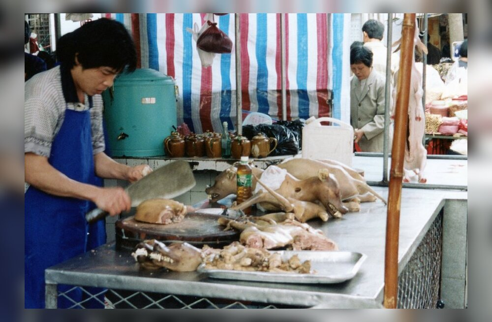 Hobuse, koera ja elevandi liha üks õige budist kunagi ei söö