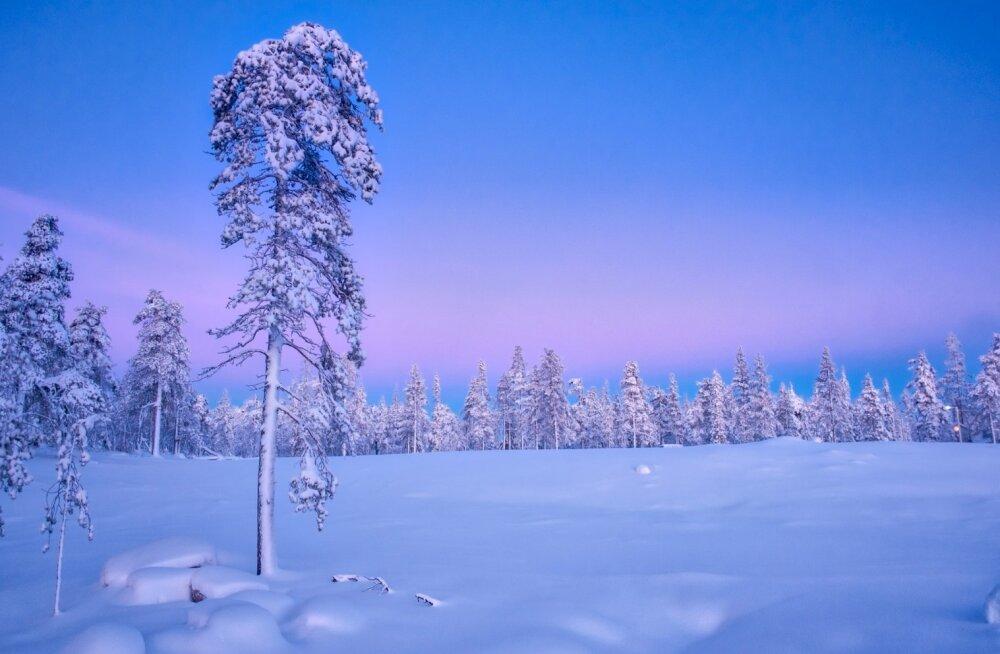 Venemaa ilmaportaal lubab, et Eestis tulevad jõulud lumerikkad ja pakaselised