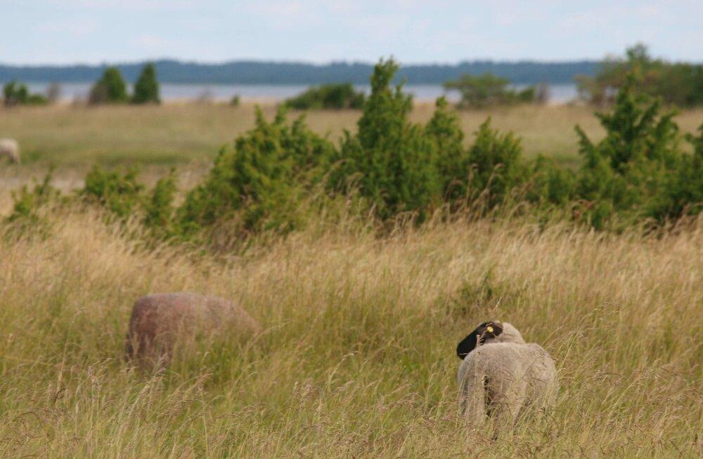 Riik ostab Saaremaal väikesadama