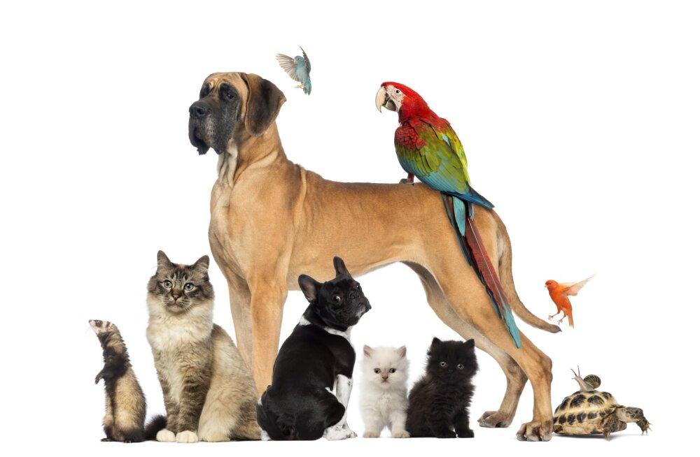 FOTOD: Vaata, kes on 15 kõige harukordsemat lemmiklooma