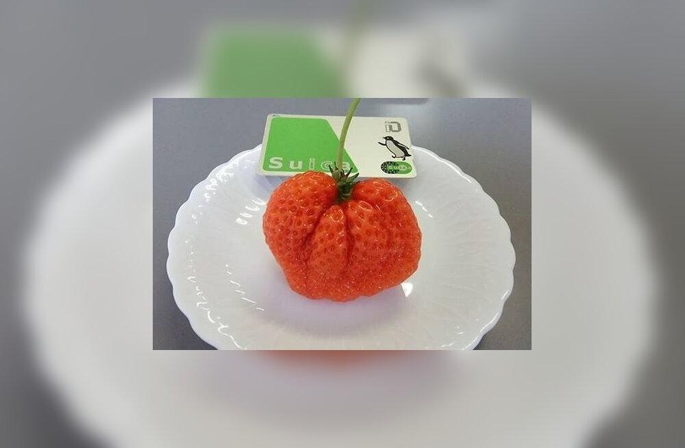 Suvi pole täie ette läinud, kui maitsmata on hiigelmaasikas (7,4 eurot tükk!)