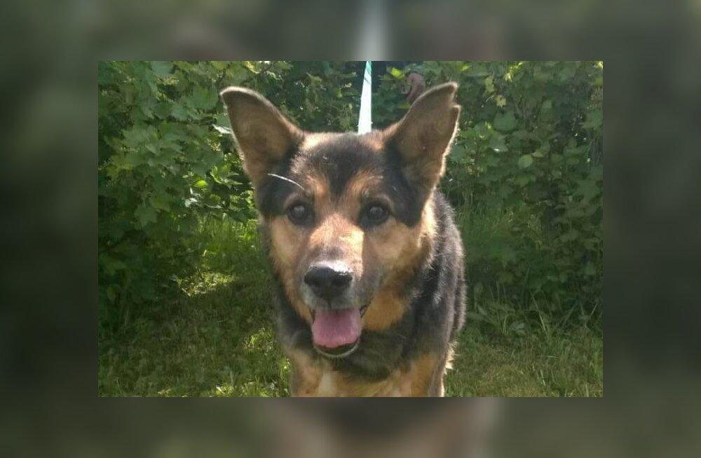 Sanja lugu: loomade päästeorganisatsioonile aluse pannud Sanja leidis uue kodu