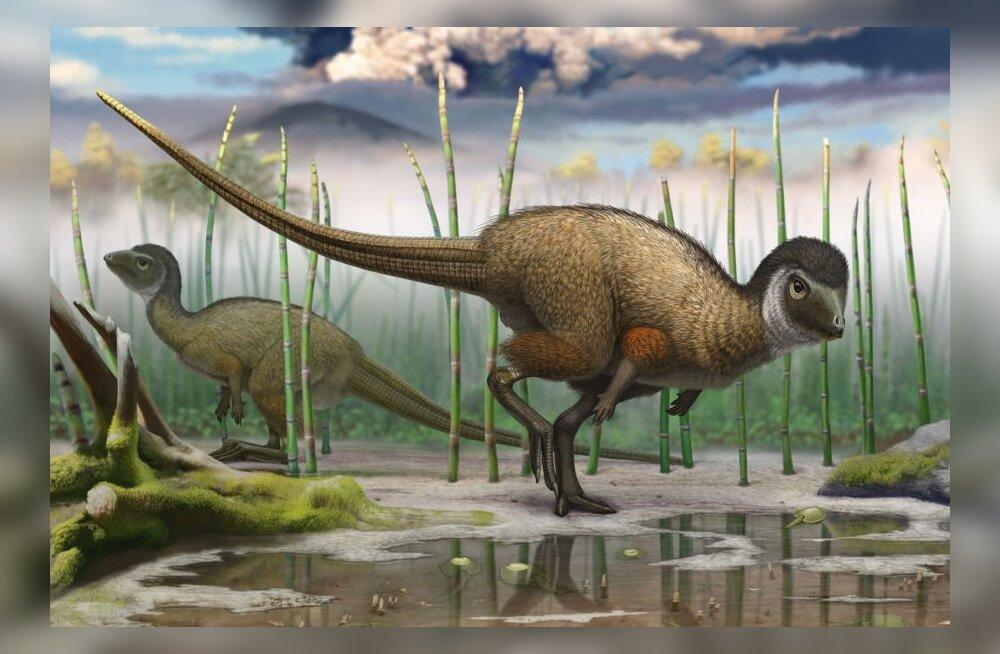 Sulgedega dinosauruseid võis olla palju rohkem kui seni arvatud