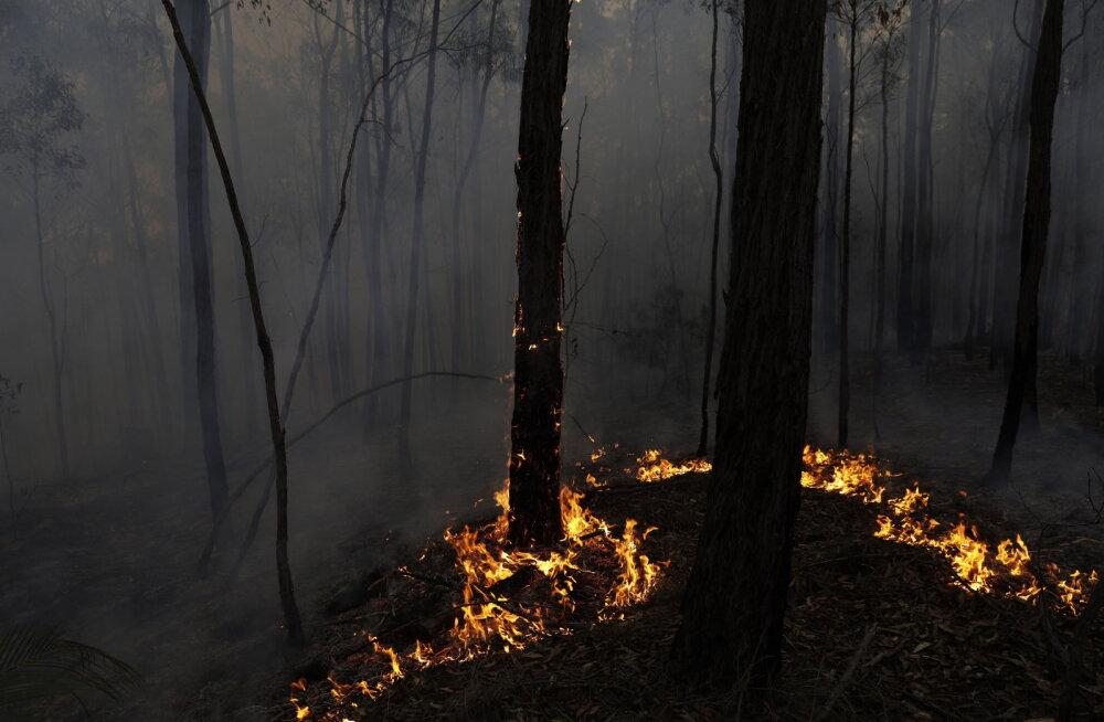 DELFI KAUNASES | Žalgirise austraallane pani võitluses Austraalia metsapõlengute vastu käima heategevusprojekti: iga sent aitab