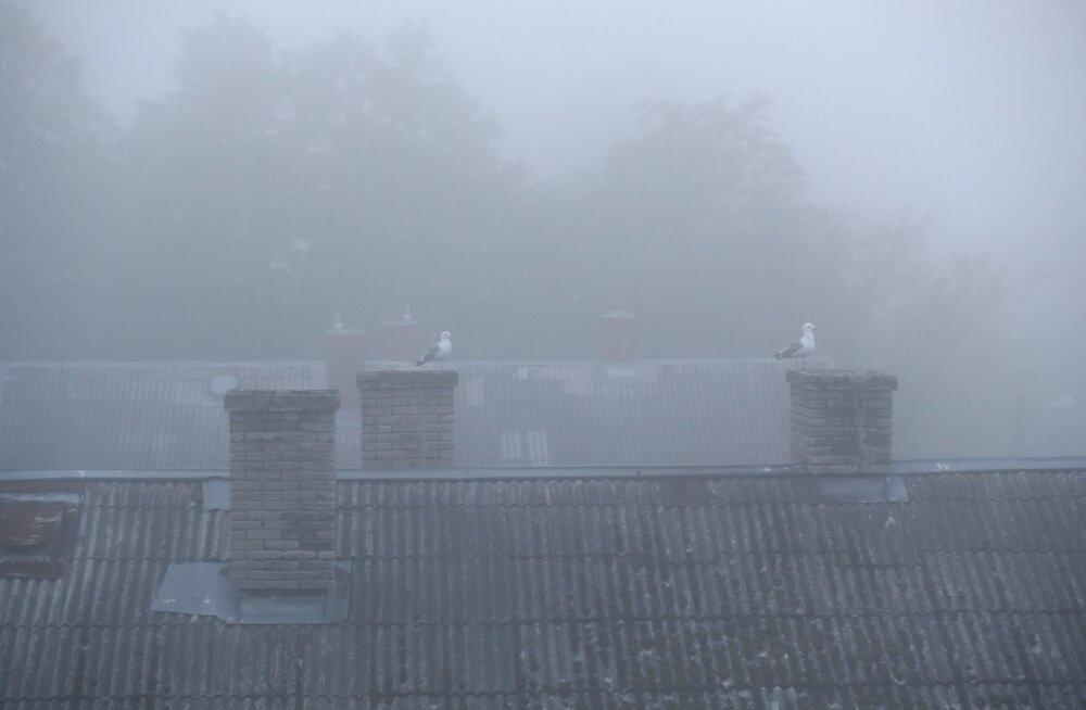 Tallinna kesklinn mattus udusse
