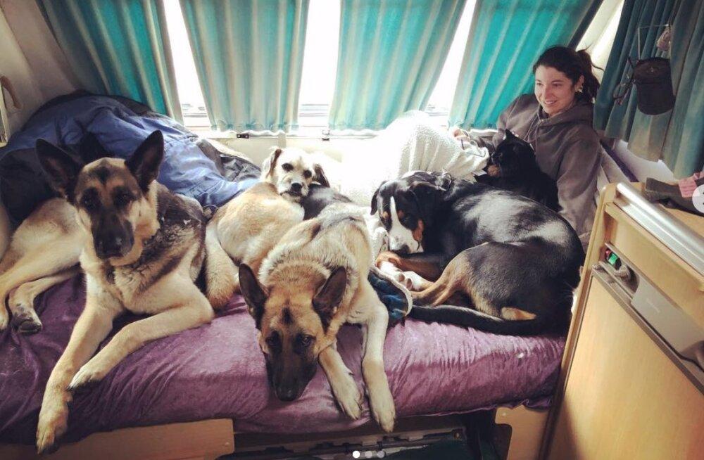 Kas nuhtlus või nauding? Paarike reisib haagissuvilaga mööda Euroopat, kaasas 9 koera ja 5 kassi