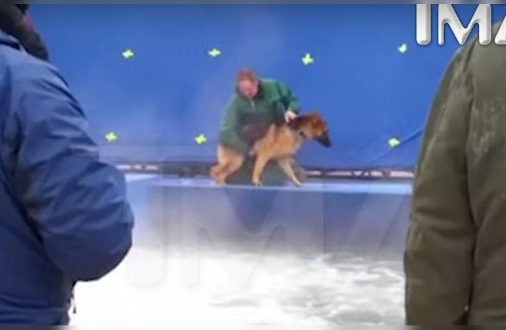 """Uurimine näitas, et internetti lekkinud filmi """"Koera elu mõte"""" šokeeriv väärkohtlemise video oli võltsitud"""