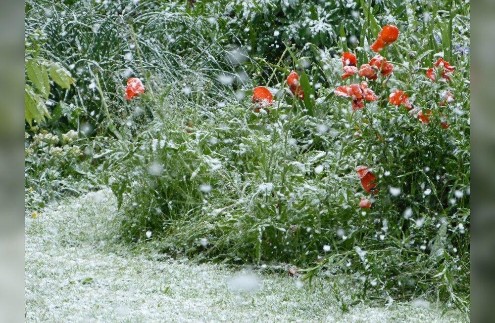 Lumi juunikuus