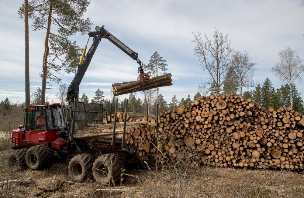 В Рийгикогу назвали главные направления в развитии лесоводства Эстонии