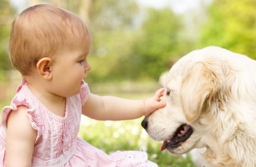 NIPID | Koer ja beebi: kuidas muuta ühised jalutuskäigud mugavaks ja turvaliseks?