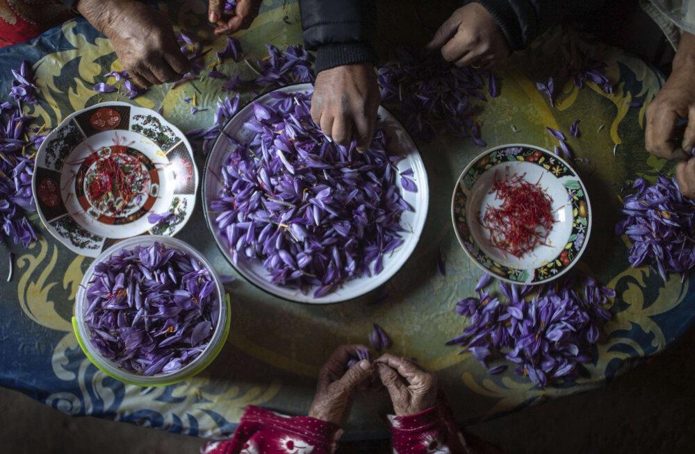 ФОТО | Красное золото: Эти женщины добывают самую дорогую специю в мире. И все равно живут в нищете