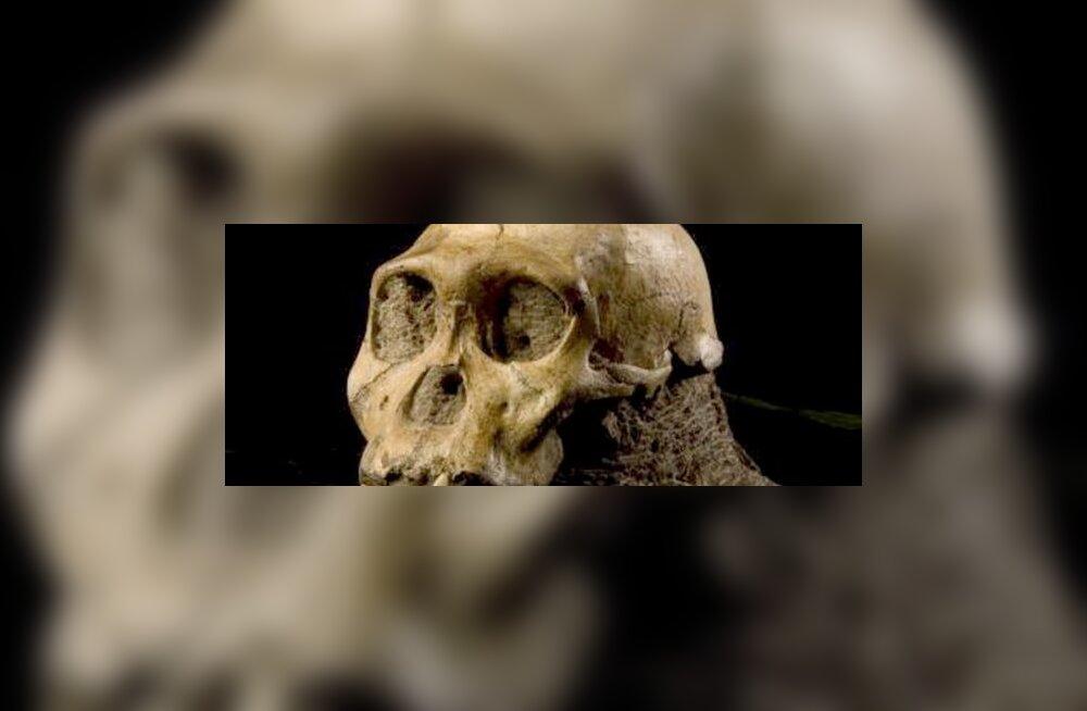 Leiti ahvi ja inimese vahepealne liik?
