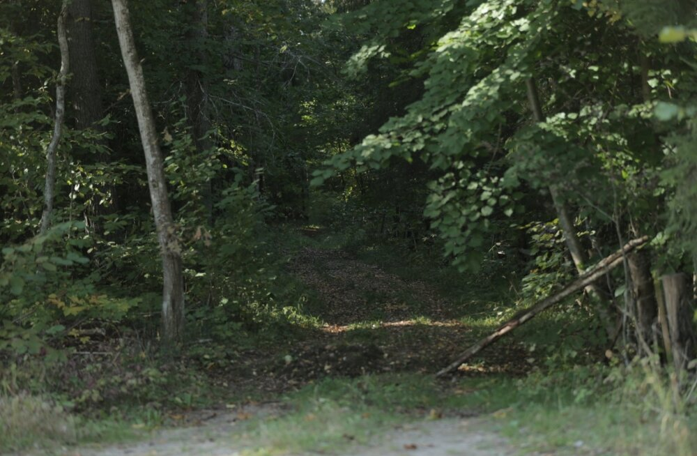 Mets sündmuskoha lähedal