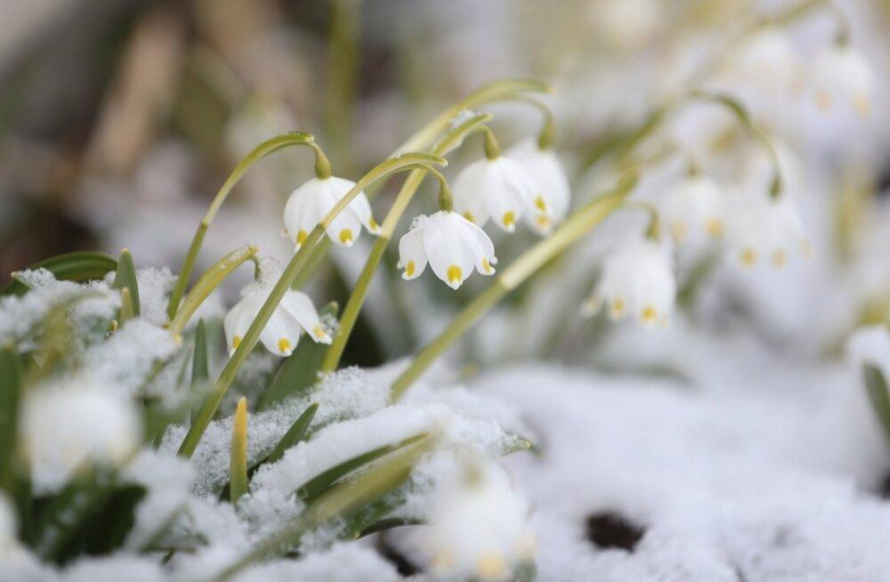 Как правильно встретить весну по Знаку Зодиака